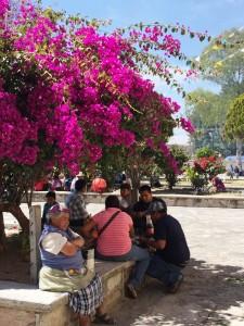 Oaxaca flowers