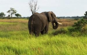 Elephant Eagle Island